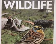 Spurn Wildlife 2016 Review