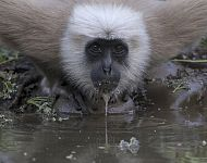 Wildlife Of Northern India - Steve Race