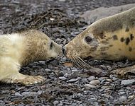 Grey Seal Bespoke Photography Experience