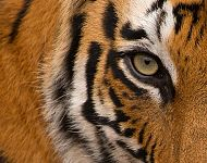 2021 Tigers of India Spring Photography Tour