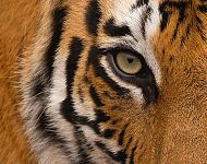 2021 Tigers of India Autumn Photography Tour