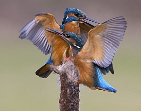 2018 Kingfisher Photography Workshops