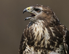 2021 Birds Of Prey Photography Experience