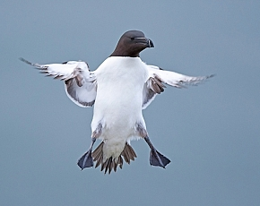 2022 Seabird Taster Photography Workshops