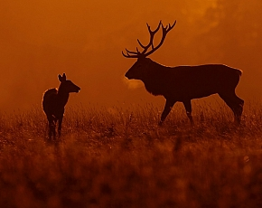 2022 Deer Rut Photography Experience