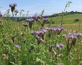 Wild Flower Discovery Walks - Flowers Of A Lowland Farm