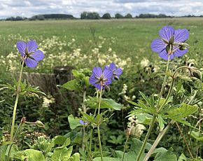 Wild Flower Discovery Walks - Lowland Meadows And Wetland Flowers