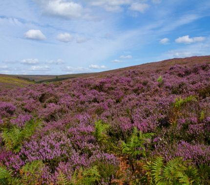 North York Moors National Park