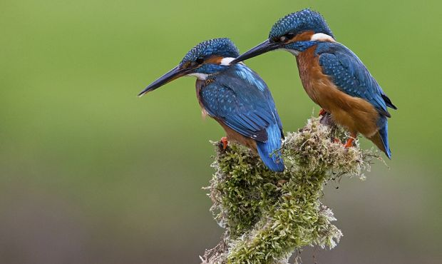 Kingfisher Photography Workshops