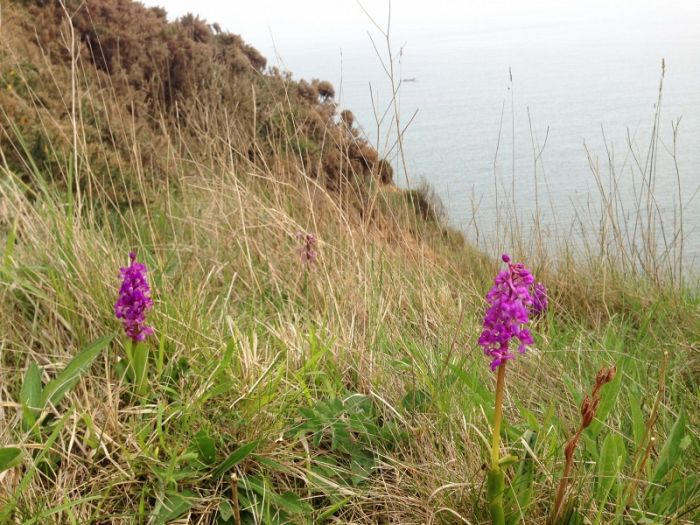 Early Purple Orchid © Richard Baines