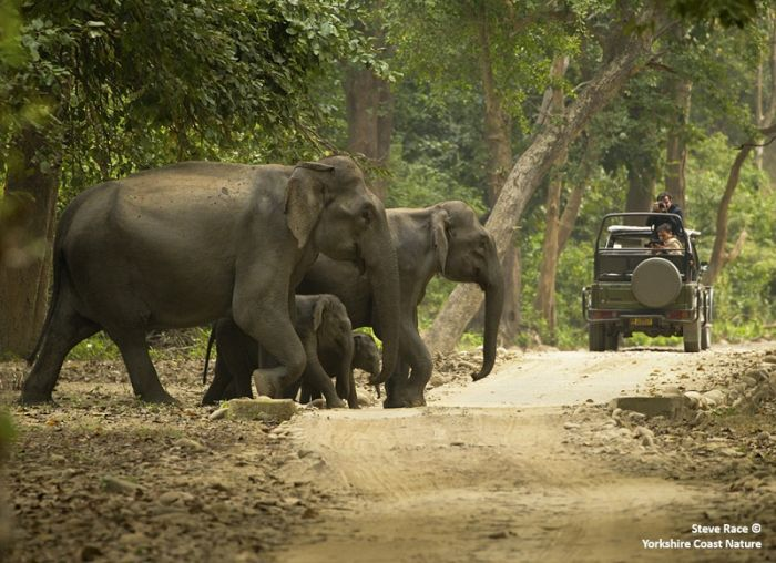 Asian Elephant family in Corbett NP © Steve Race