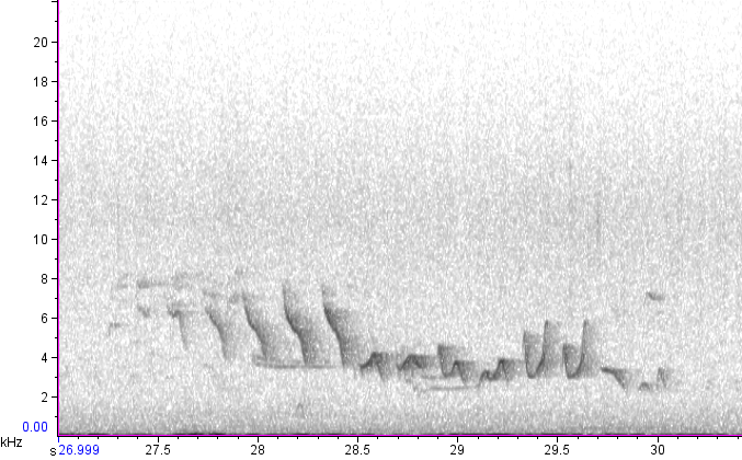 Willow Warbler spectogram from the YCN & NT Sound Workshop 2 June 2019