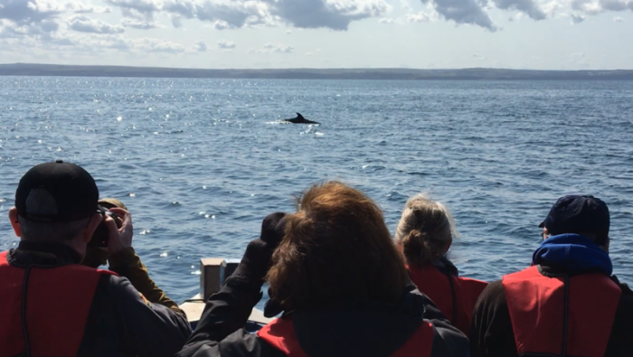 Watching a Minke Whale aboard All My Son's © YCN