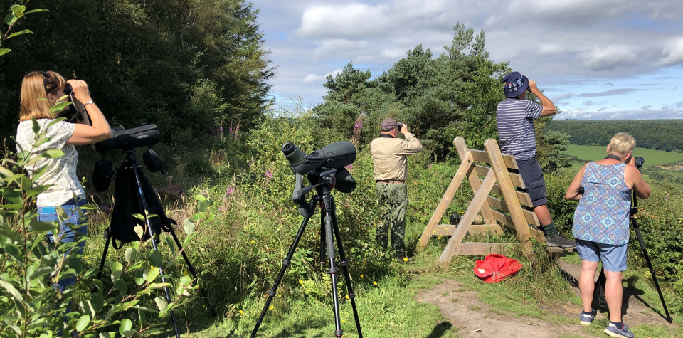 Wykeham Raptor View Point YCN Birding Group 2019